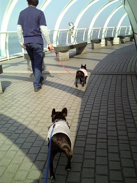 20080406_横浜港シンボルタワー�B.jpg