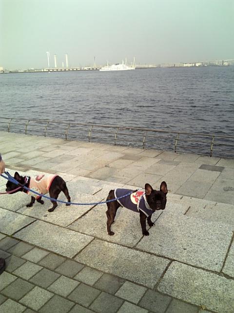 20080414_また歩いたよ�D.jpg