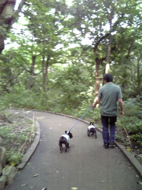 20080616_陣ケ下渓谷公園�A.jpg