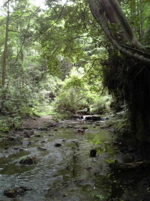 20080616_陣ケ下渓谷公園�C.jpg