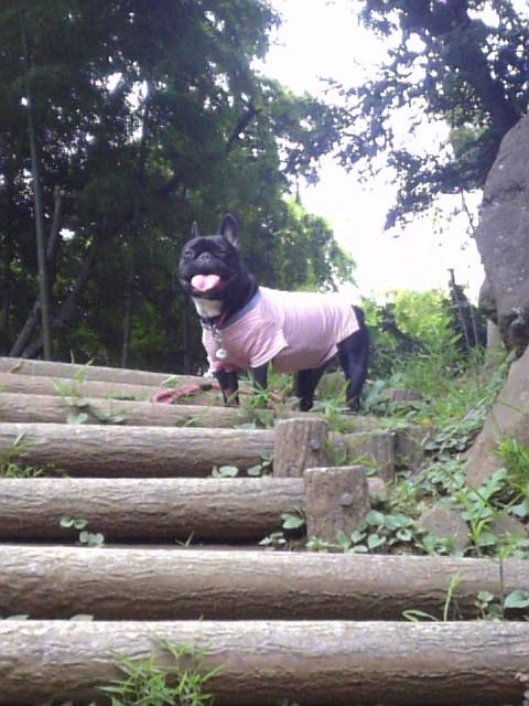 20080711_大倉山公園�B.jpg